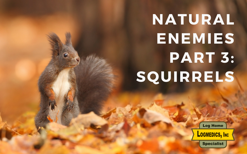 Natural Enemies Part 3: Squirrels