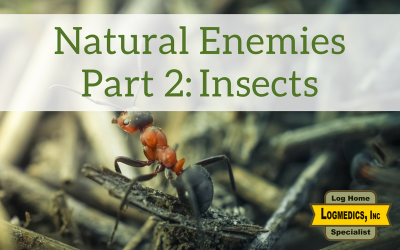 Natural Enemies Part 2: Insects