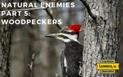Natural Enemies Part 5: Woodpeckers